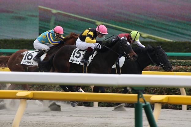メリートーン レース(17/02/05・8R)
