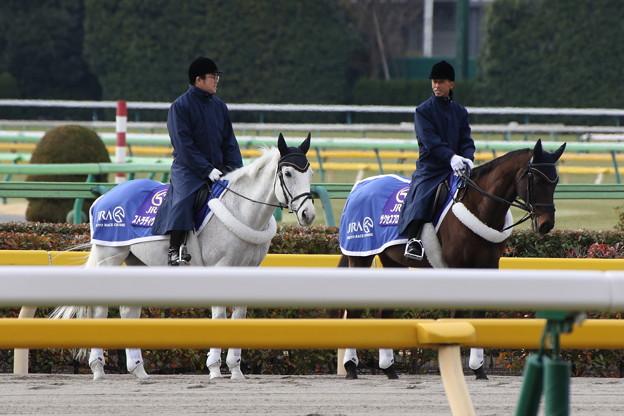 東京競馬場 誘導馬_1(17/02/05)