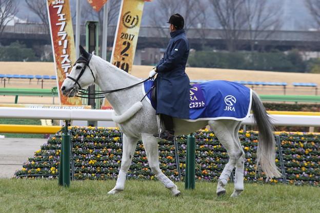 東京競馬場 誘導馬・ユーワビスケット_2(17/02/05)
