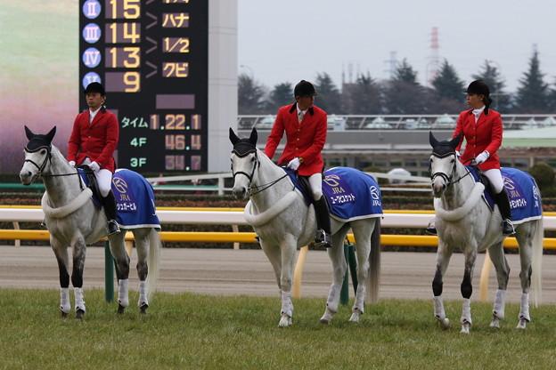 東京競馬場 誘導馬_4(17/02/05)