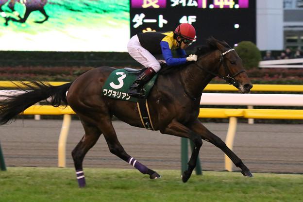 ワグネリアン レース(17/11/18・ 第22回 東京スポーツ杯2歳ステークス)