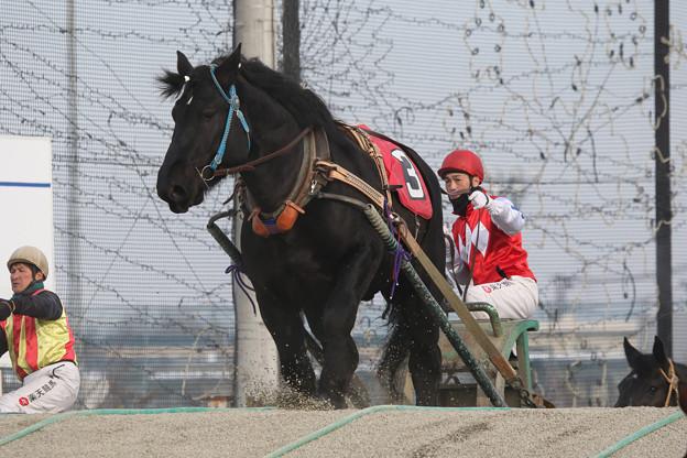 写真: ジャンゴ レース(18/01/20・2R)