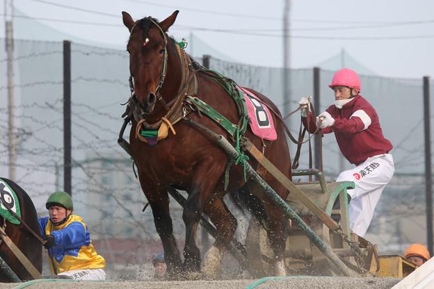 ハルカガール レース(18/01/20・2R)