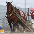 写真: ハルカガール レース(18/01/20・2R)