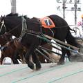 写真: オレノココロ レース_2(13/03/16・5R)