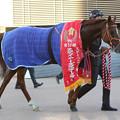 写真: アルバート_1(17/12/02・第51回 スポーツニッポン賞ステイヤーズステークス)