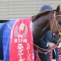 写真: アルバート_2(17/12/02・第51回 スポーツニッポン賞ステイヤーズステークス)