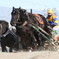 写真: ディーステンルネ レース(18/01/21・1R)
