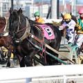 写真: フクノタイクーン レース_1(18/01/21・2R)