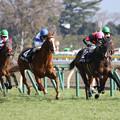 写真: ハッピーグリン レース_1(18/01/28・セントポーリア賞)