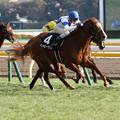 写真: ハッピーグリン レース_2(18/01/28・セントポーリア賞)
