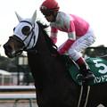 写真: バンドワゴン 返し馬(17/12/09・第53回 中日新聞杯)