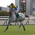 写真: マウントロブソン 返し馬(17/12/09・第53回 中日新聞杯)