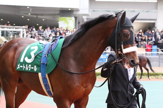 メートルダール パドック_1(17/12/09・第53回 中日新聞杯)