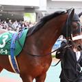 写真: メートルダール パドック_1(17/12/09・第53回 中日新聞杯)