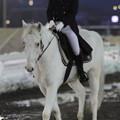 写真: 誘導馬 プリンス_2(18/03/04・第49回 イレネー記念)