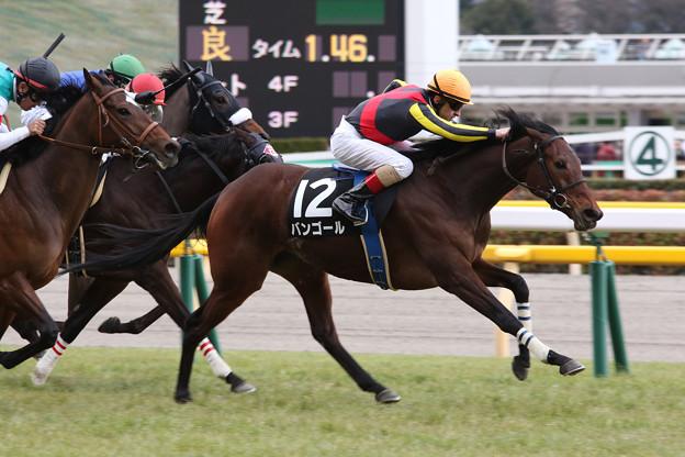 バンゴール レース(17/02/11・9R)