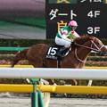 ポイントブランク レース(17/02/11・銀蹄ステークス)