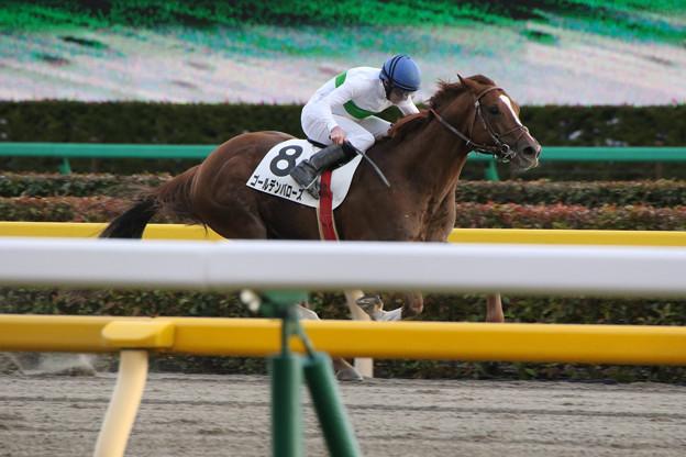 ゴールデンバローズ レース(17/02/11・12R)