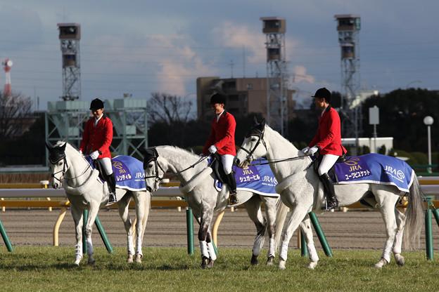 東京競馬場 誘導馬_5(17/02/11)