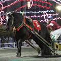 写真: カネサダイマオー レース(18/03/04・第49回 イレネー記念)