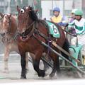写真: サクラリュウ レース(12/05/13・3R)