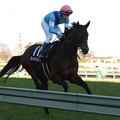 写真: グレーターロンドン 返し馬(17/12/17・ディセンバーステークス)