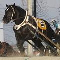 ジーワンキング レース_2(18/03/03・6R)