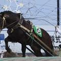 写真: レットフジ レース(18/01/20・7R)