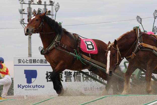 ニュータカラコマ レース_2(10/07/18・4R)