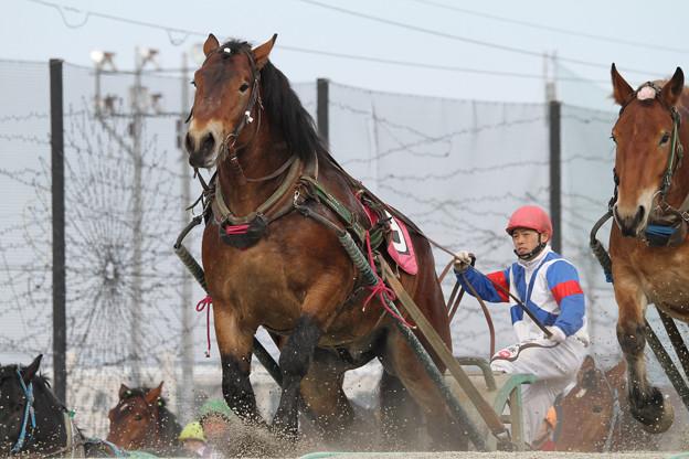 ツガルノボブ レース(18/03/04・3R)