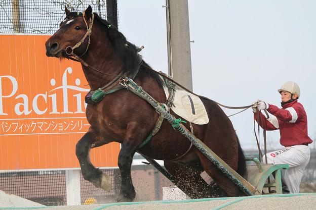 コマノダイジン レース_2(18/03/04・5R)