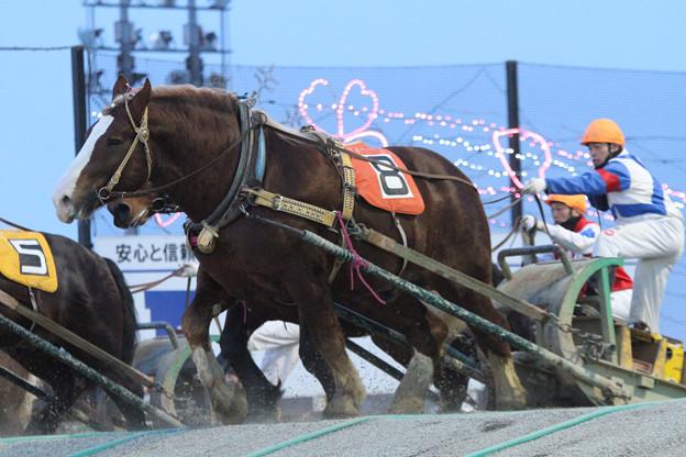 シンエイパワー レース(18/03/04・9R)