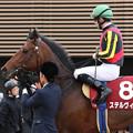 ステルヴィオ レース後(18/03/18・第67回 フジテレビ賞スプリングステークス)
