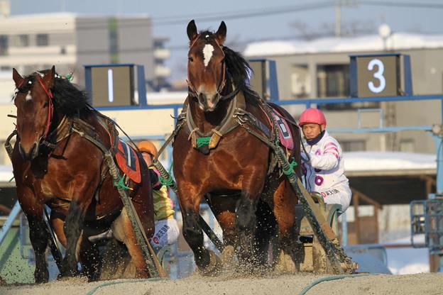 写真: ホクショウゼウス レース(18/03/03・7R)