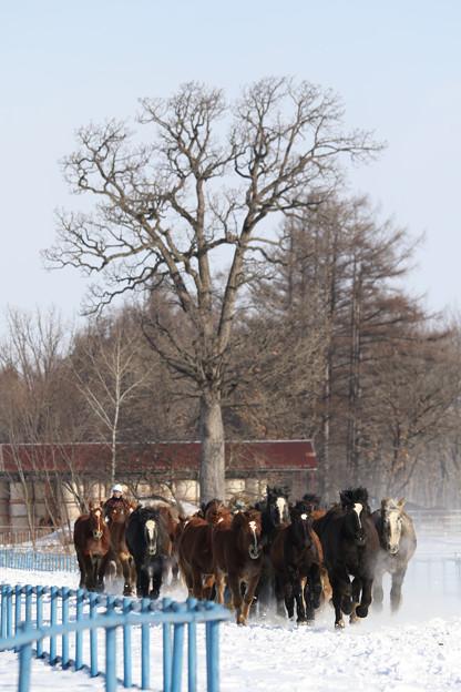 Photos: 十勝牧場 雪中運動_17(18/01/22)