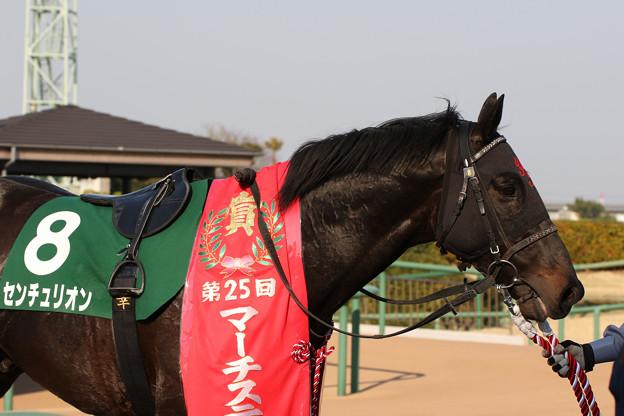 センチュリオン(18/03/25・ 第25回 マーチステークス)