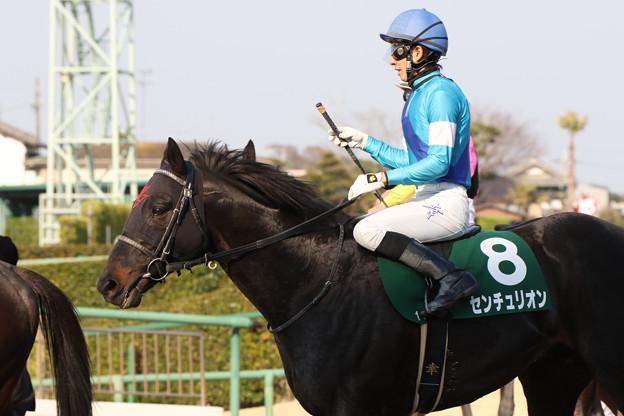 センチュリオン レース後(18/03/25・ 第25回 マーチステークス)