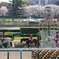中山競馬場 誘導馬_4(18/03/31)