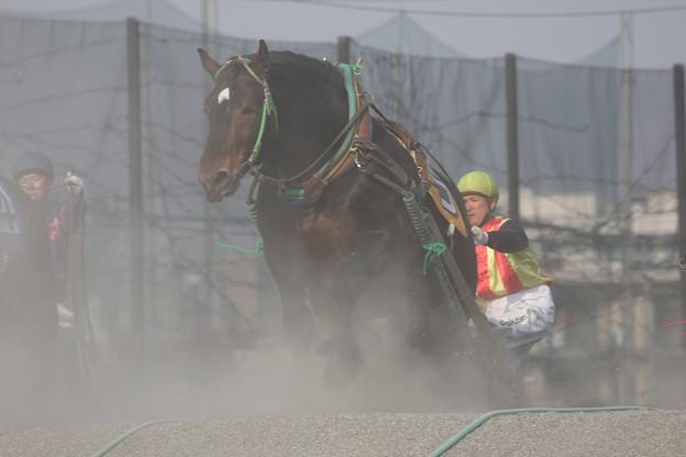 タイショーセンプー レース(18/04/29・3R)