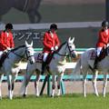 写真: 中山競馬場 誘導馬_7(18/03/31)