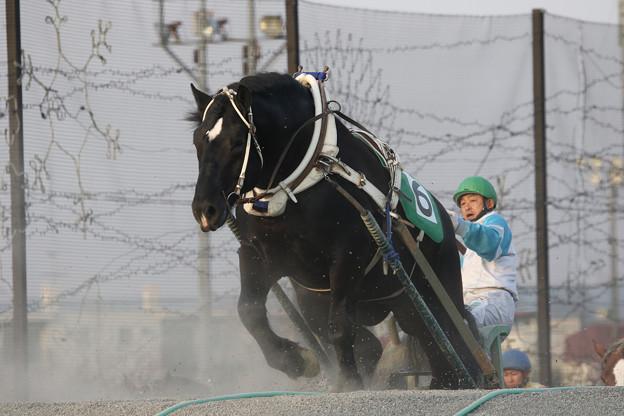 ジーワンキング レース(18/04/29・5R)