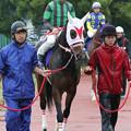 Photos: サムライドライブ パドック(18/05/02・第57回 駿蹄賞)