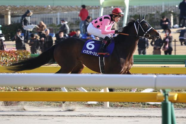 写真: インカンテーション 返し馬(18/02/18・第35回 フェブラリーステークス)