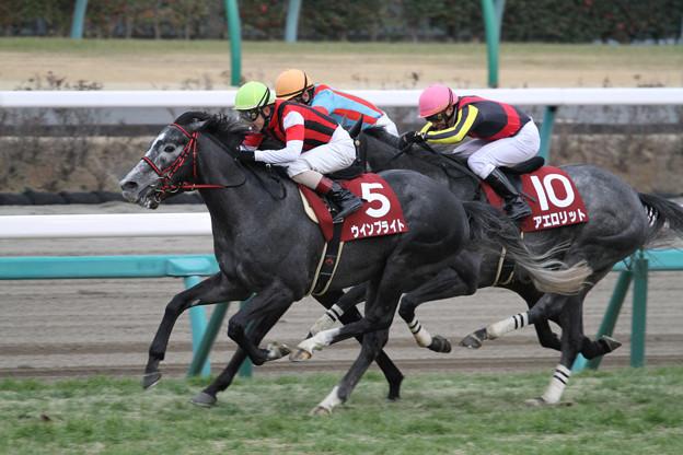 写真: ウインブライト レース(18/02/25・第92回 中山記念)