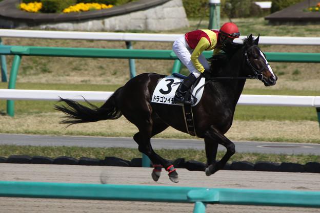 写真: ドラゴンイモン 返し馬(18/03/31・7R)