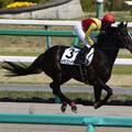 Photos: ドラゴンイモン 返し馬(18/03/31・7R)