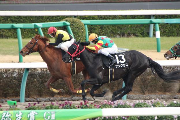サングラス レース(17/03/05・上総ステークス)