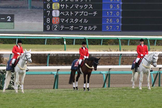 中山競馬場 誘導馬_6(17/03/05)