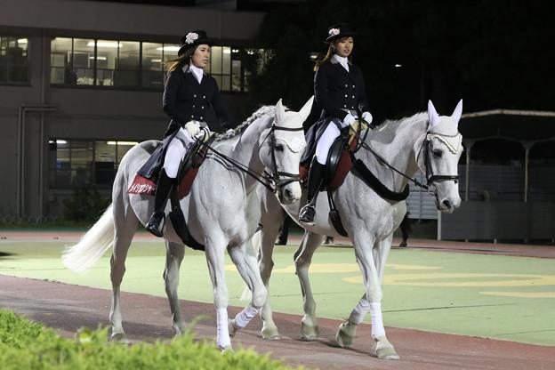 写真: 第54回 兵庫大賞典 誘導馬_1(18/05/04・第54回 兵庫大賞典)